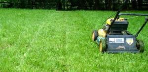 Summer Lawn Transistion